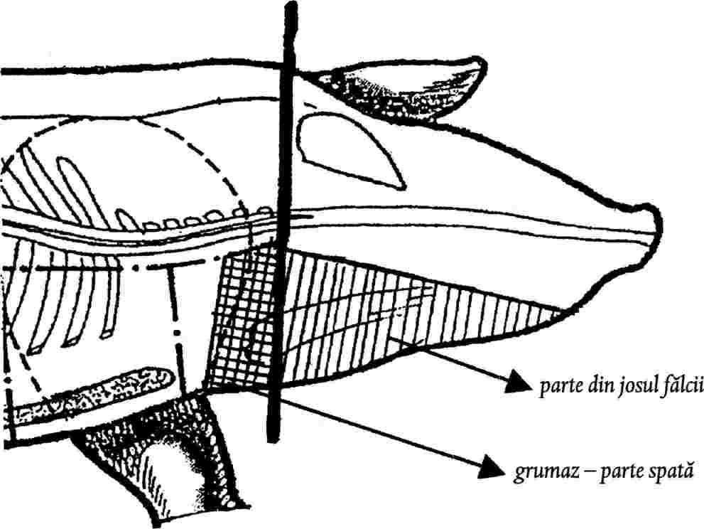 Flebite profonda gamba sintomi