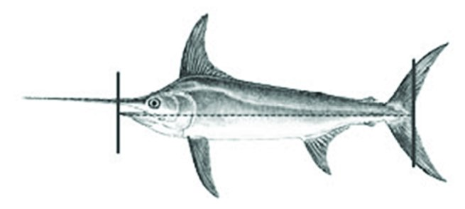 Datant Marlin 60